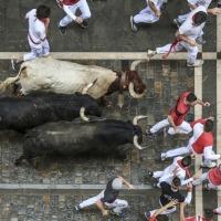 Fiestas, Bullfighting, and Wine